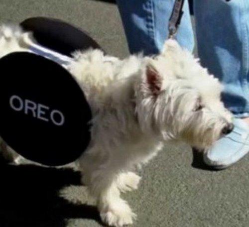 Собаки в худших самодельных костюмах (10 фото)