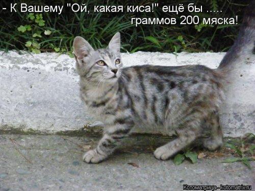 Свежая котоматрица для настроения (28 фото)