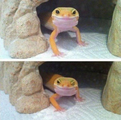 Забавные животные, которые заставят вас улыбнуться (17 фото)
