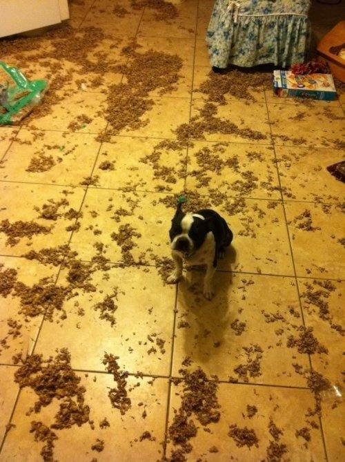 Собаки-хулигаки (17 фото)