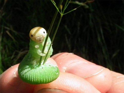 Фотожабы на гусеницу, держащуюся за стебли травы (17 фото)