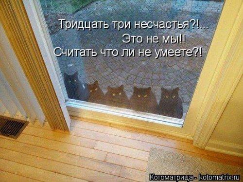 Свежая котоматрица для улыбок (32 фото)