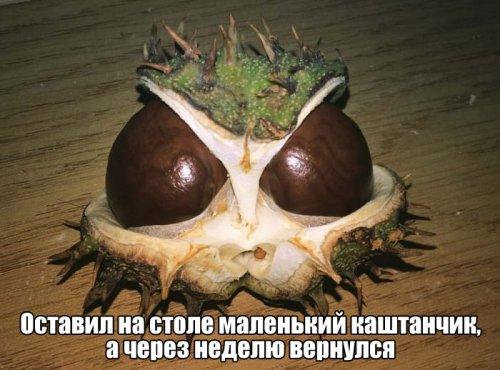 http://www.bugaga.ru/uploads/posts/2016-09/thumbs/1474663552_pozitiv-25.jpg