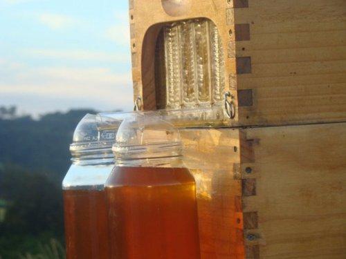 Рекордный стартап: уникальный улей с автоматическим сбором мёда (6 фото)