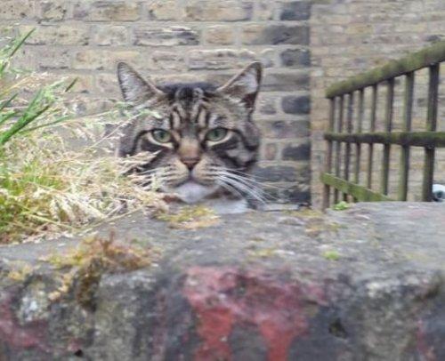 Котейки что-то замышляют (16 фото)