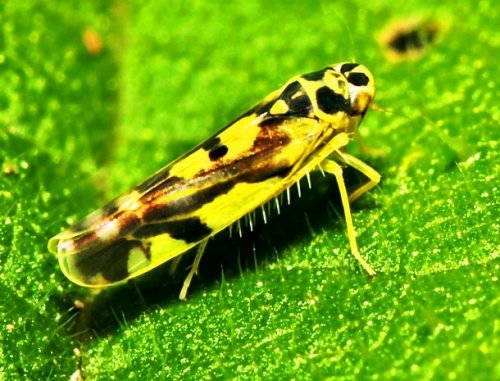 Топ-25: Потрясающе красивые насекомые