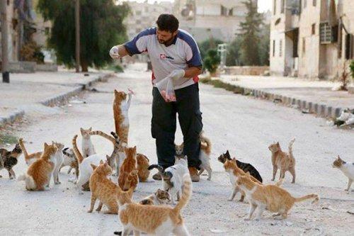 Мужчина живёт в охваченном войной Алеппо, чтобы заботиться о бездомных и брошенных кошках (7 фото + видео)