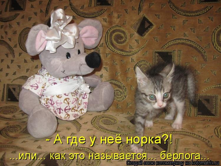 Прикольные картинки с надписями кот и мыши, дмитрию февраля