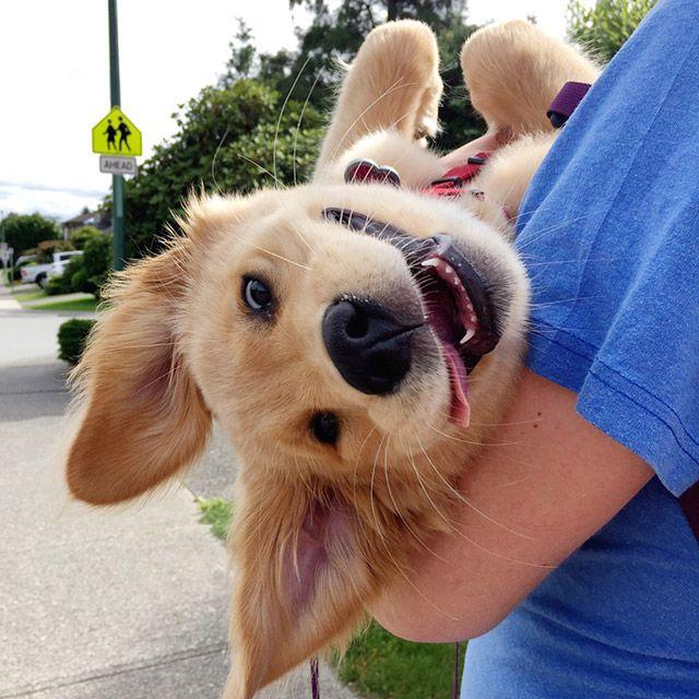 Днем, картинки про людей и собак смешные
