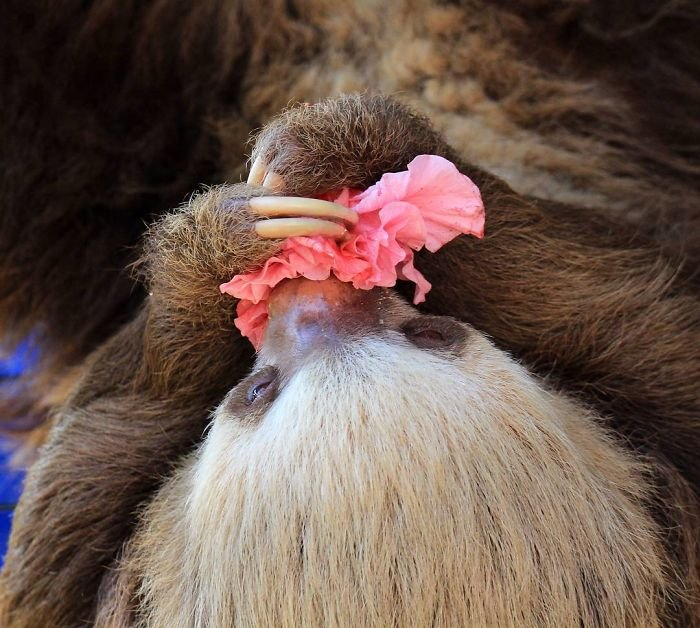 Очаровательные ленивцы (37 фото): http://www.bugaga.ru/jokes/1146757837-ocharovatelnye-lenivcy-37-foto.html