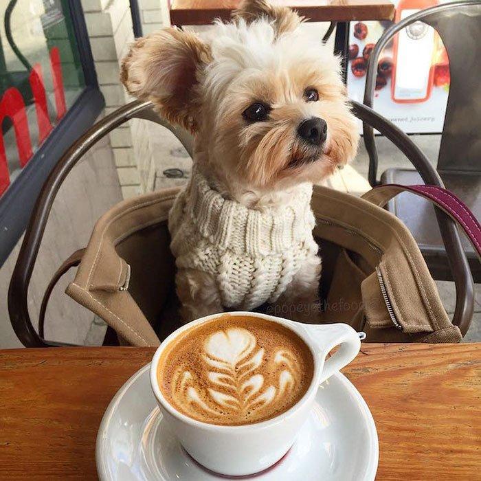 новые смешные фото животных с кофе коллекция карикатур веселых