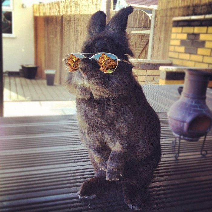 Фото на аву зайчика