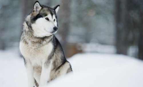 Топ-10: Невероятные истории выживания в Арктике