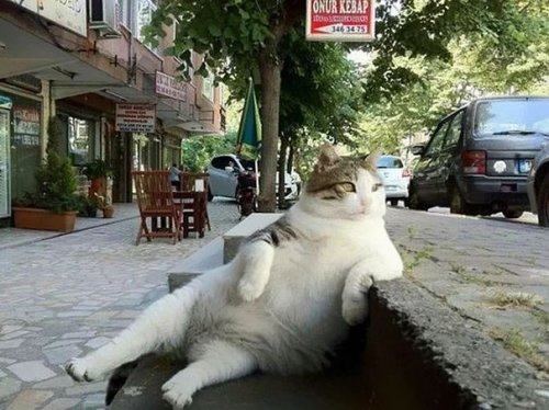 Знаменитому стамбульскому коту установили памятник (7 фото)