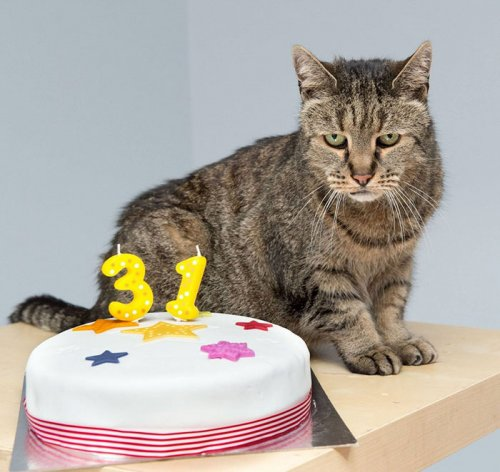 Знакомьтесь, Мускат — самый старый кот в мире (8 фото)