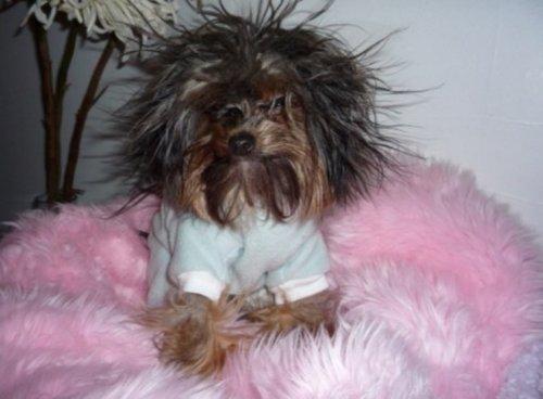 Собачки, которым надо что-то делать с причёской (10 фото)