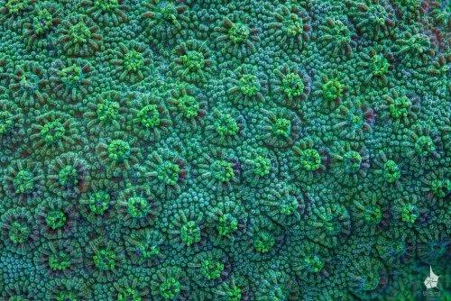 Макрофотографии кораллов Большого Барьерного Рифа (20 шт)