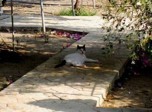 Топ-10: Странные и необычные достопримечательности Кипра