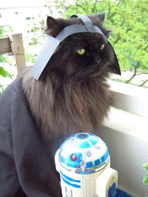 Забавные кошки в хэллоуинских костюмах (23 фото)