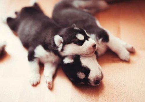 Прелестные щенки, которые вызовут вашу улыбку (25 фото)