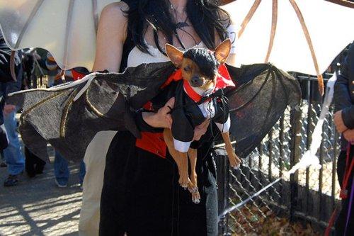 Забавные собаки в хэллоуинских костюмах (18 фото)