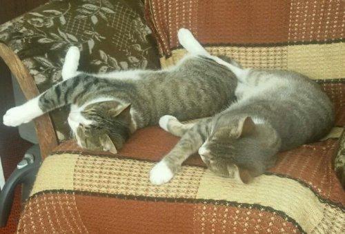 Фотографии с кошками для настоящих перфекционистов (34 фото)