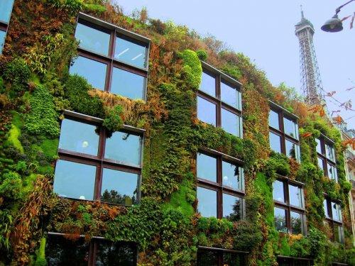 Париж озеленяется (6 фото)