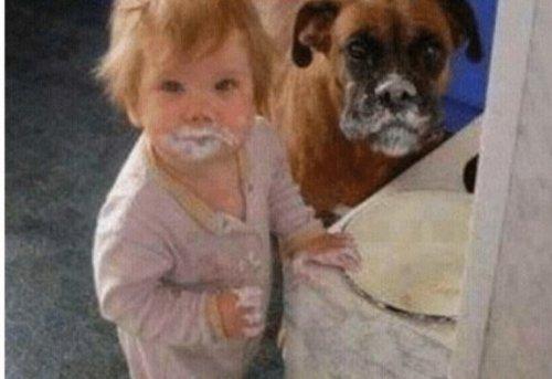 Забавные собаки, копирующие детей (10 фото)