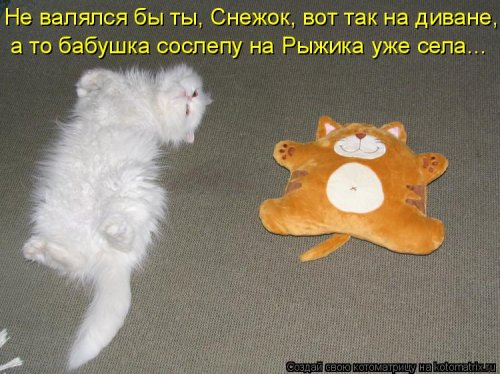 Новая котоматрица для всех и каждого (30 фото)