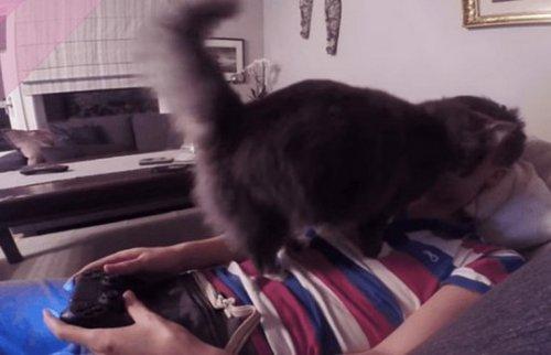 Смешные кошки, которые требуют внимания (10 фото)