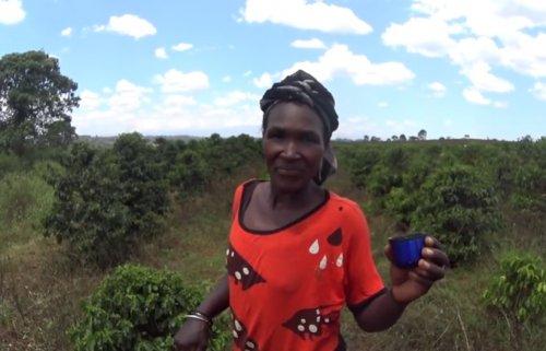 Работники кофейной плантации впервые в жизни пробуют кофе