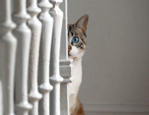 Забавные кошки, которым интересно, чем это вы там занимаетесь (24 фото)