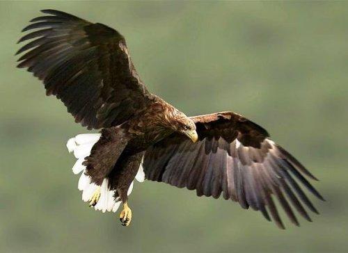 Топ-25: Крупнейшие  хищные птицы, которые на самом деле потрясающи, хотя и внушают страх