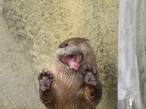 Забавные животные, которые вызовут у вас улыбку (19 фото)