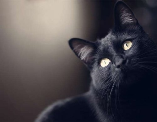 Топ-25: Любопытные факты про кошек, которые большинство людей могли не знать
