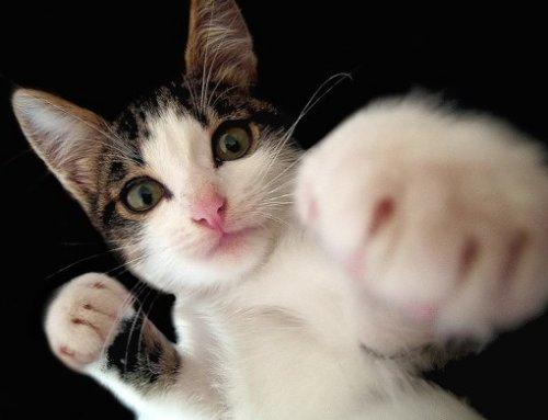 Боевые кошки (10 фото)