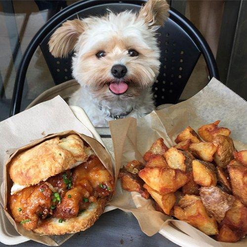 Некогда бродячий пёсик теперь каждый день ходит в ресторан (24 фото)