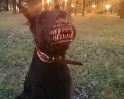 Страшные костюмы на Хэллоуин для собак (10 фото)