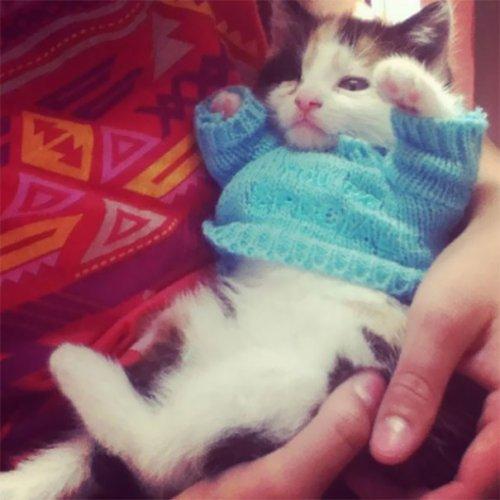 Прелестные животных в свитерах (37 фото)