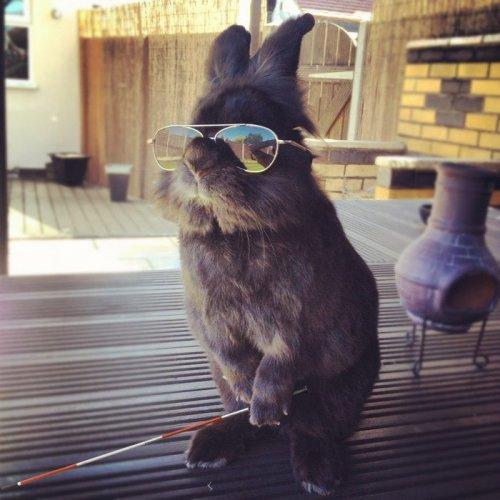 Кролик в очках и фотожабы на него (15 фото)