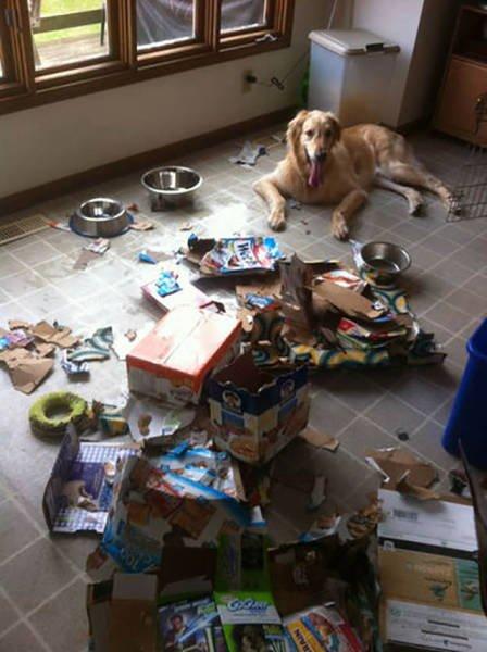 Чем занимаются домашние животные в отсутствие хозяев (31 фото)