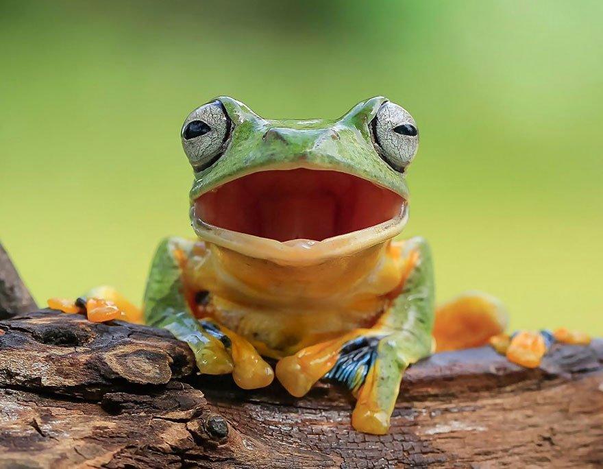 можно удивленная лягушка картинки домой, она