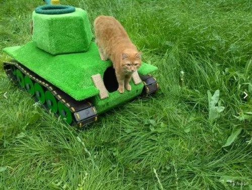 Кошачий танк для захвата мира (7 фото + видео)