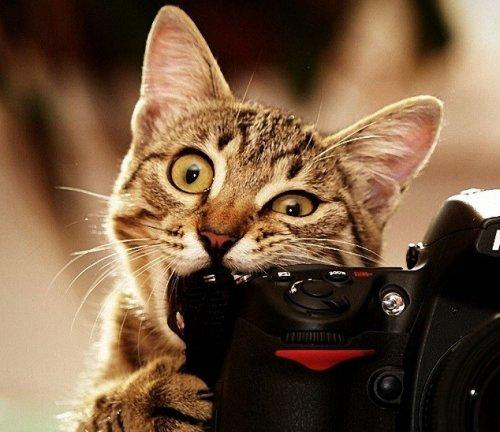 Топ-10: Кошки-обжоры, которые едят всё подряд