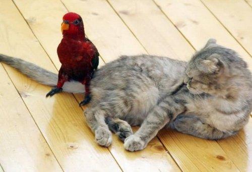 Очаровательные кошки, которые дружат с птицами (10 фото)