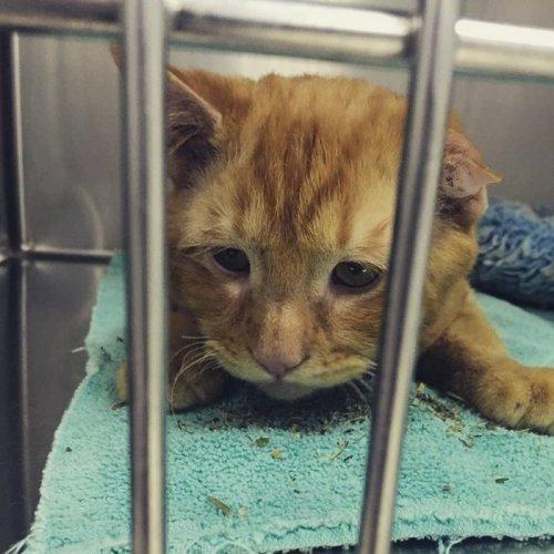 Кота забрали домой накануне эвтаназии, и он преобразился уже через час (13 фото)