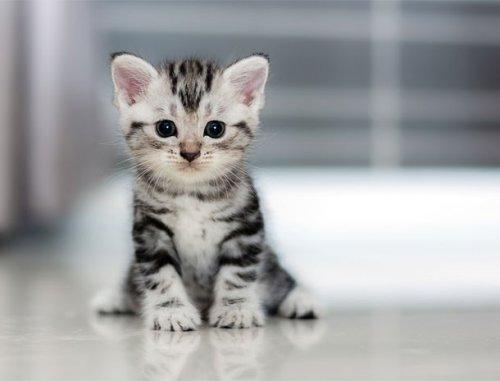 Топ-25: Стоковые фотографии очаровательных котят, которые сделают вас счастливыми