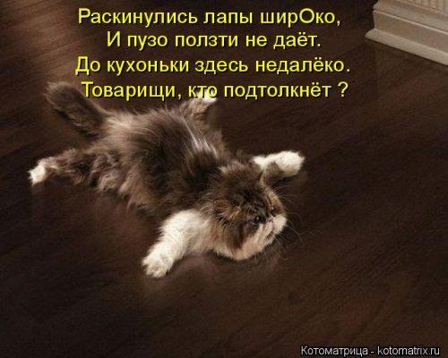 Свежая и прикольная котоматрица (32 фото)
