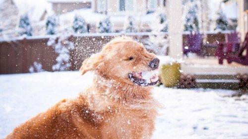 Животные радуются снегу (13 фото)