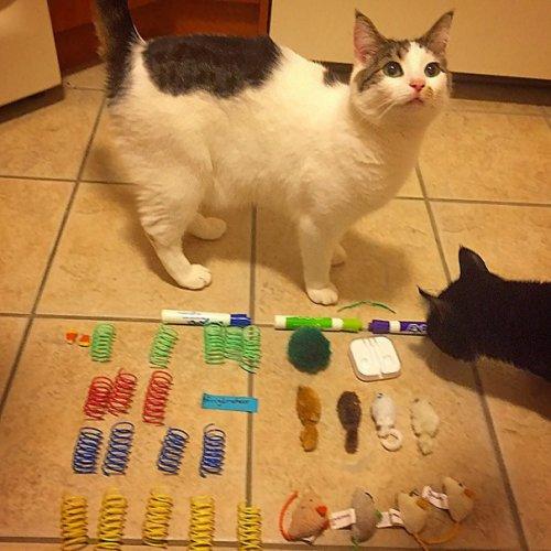 Забавные коллекции вещей, украденных кошками (13 фото)